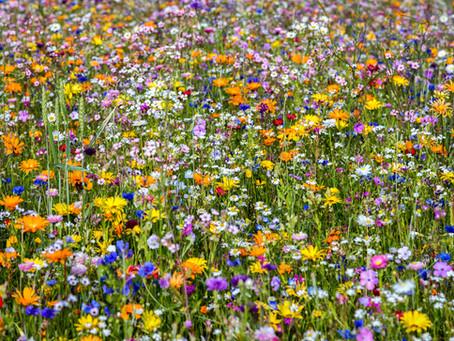 Gewürz und Heilkräuteranbau / Spice and medicinal herbs