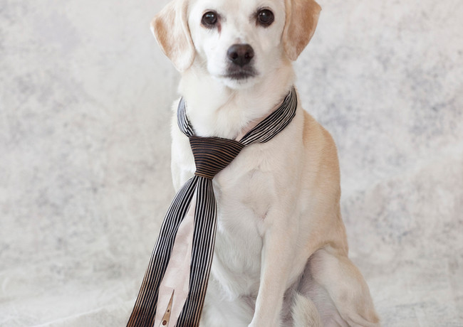 Dog and a tie
