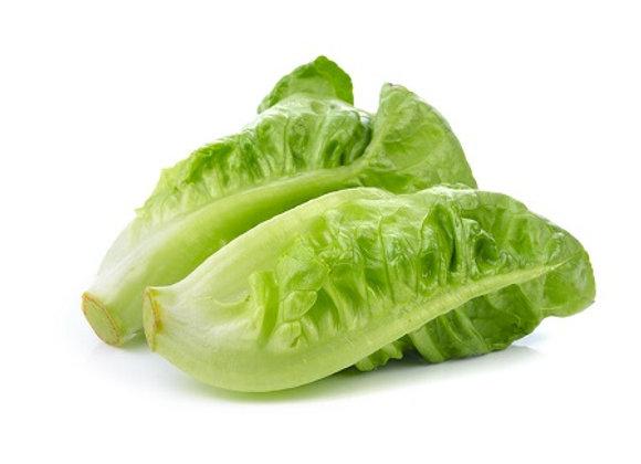 Lettuce - Baby Gem Cos