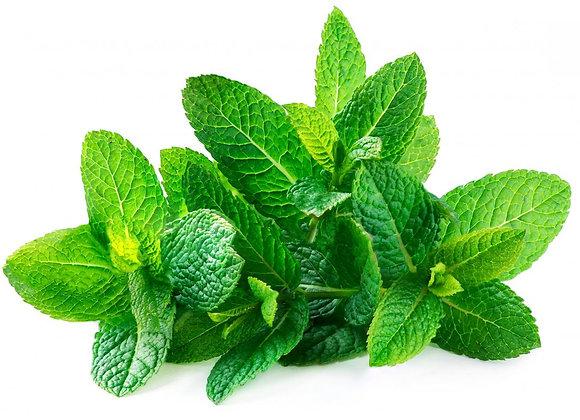 Herb - mint