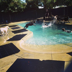 Playtime in Pool at I Dig My Dog