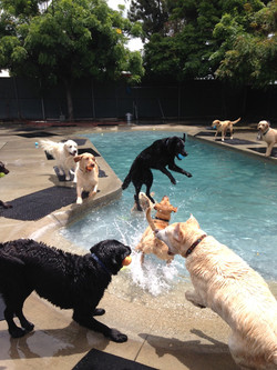 pool time at I Dig My Dog