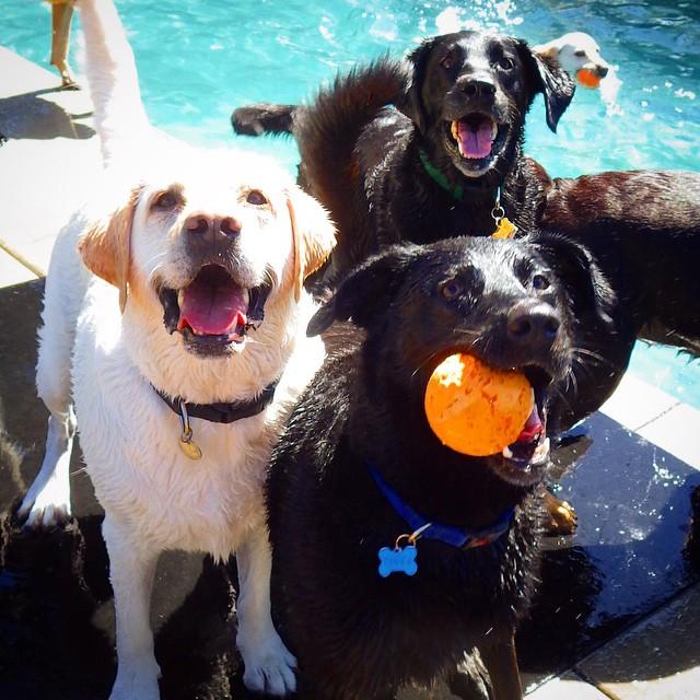 Pool Play at I Dig My Dog