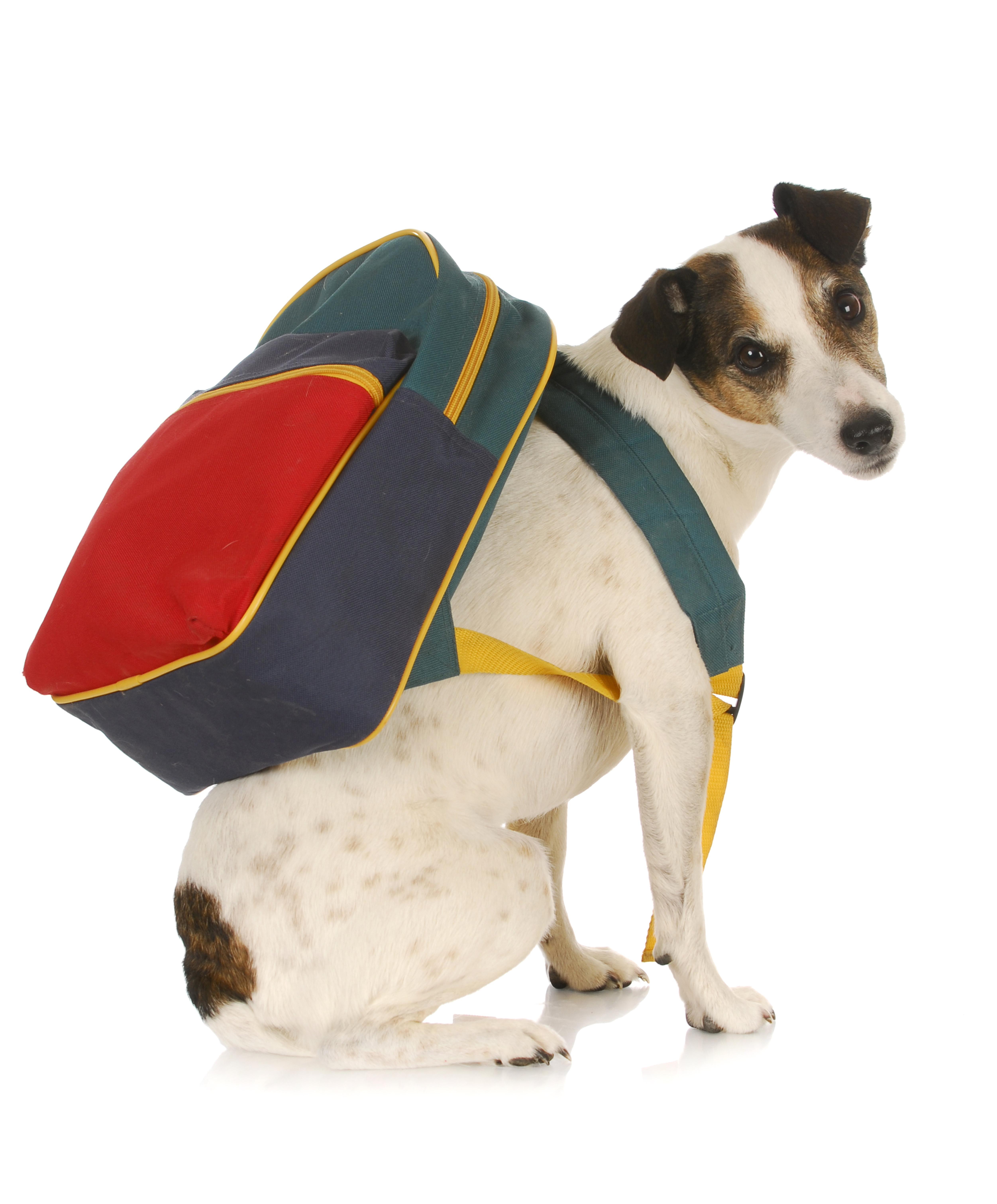 Dog Training Behavior Modification
