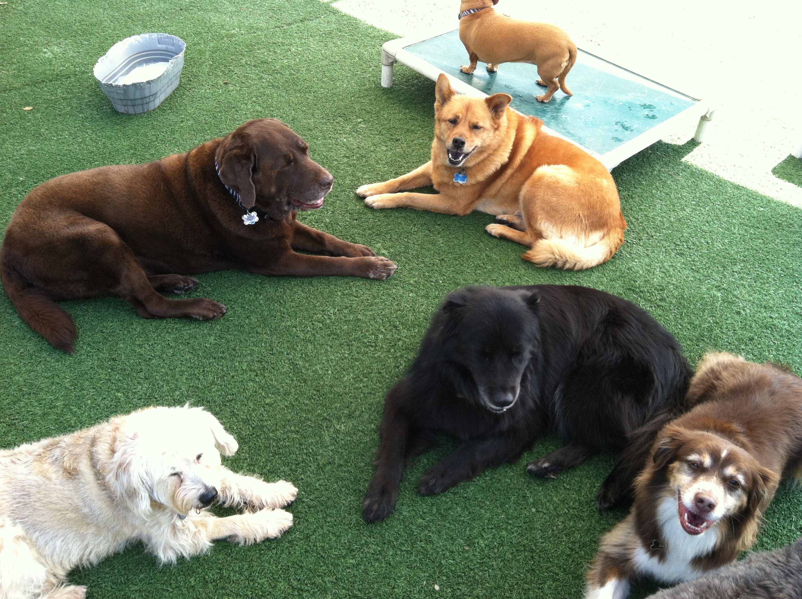Daycare at I Dig My Dog