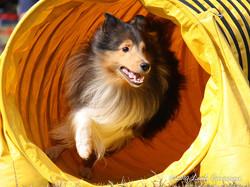 Agility Training at I Dig My Dog