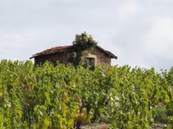 Une Cadole - cabane de vigne pour mettre outils