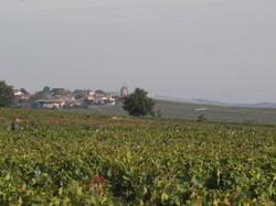 Vignoble du Moulin à Vent