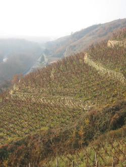 Vignoble Côte-Rôtie Stéphane Montez