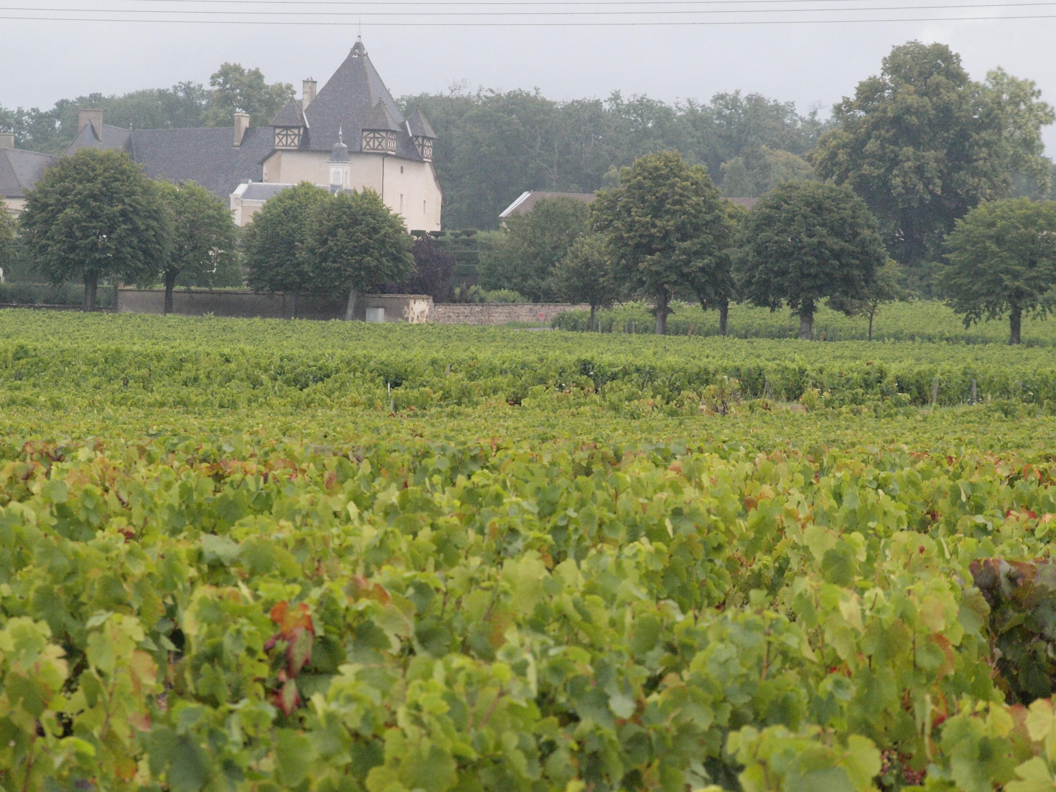 Paysage Beaujolais