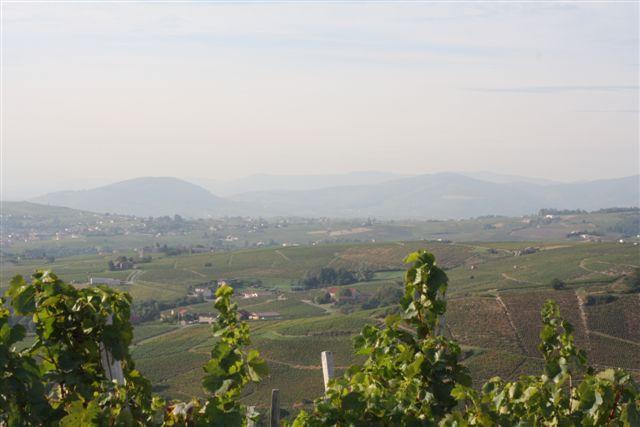 Vignes en Beaujolais
