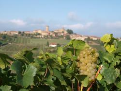 Beaujolais Blanc raisin
