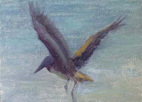 """""""Pelican – Key West"""" by Helena van Emmerik-Finn"""