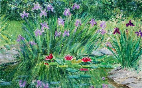 """""""Iris Pond"""" by Carol Gray"""