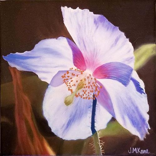 """Rare Blue Himalayan Poppy"" by Jackie Kane"