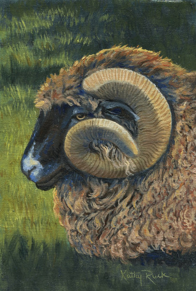 """""""Big Horned Sheep"""" by Kathy Ruck"""