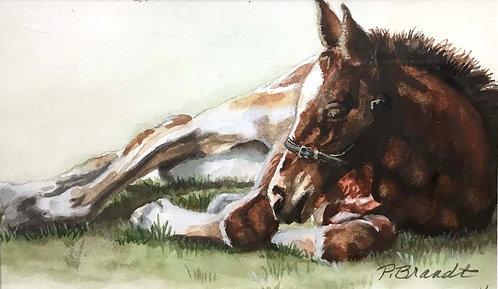 """""""Nap"""" by Patricia Brandt"""