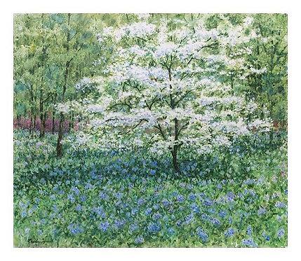 Spring at Winterthur - White Dogwood