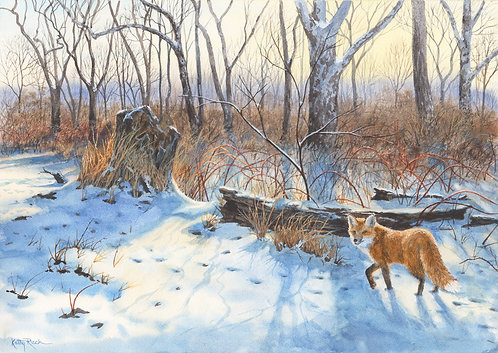 """""""Fox by the Brambles"""" by Kathy Ruck"""