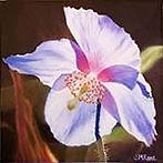 THUMB Rare Blue Himalayan Poppy - UNfram