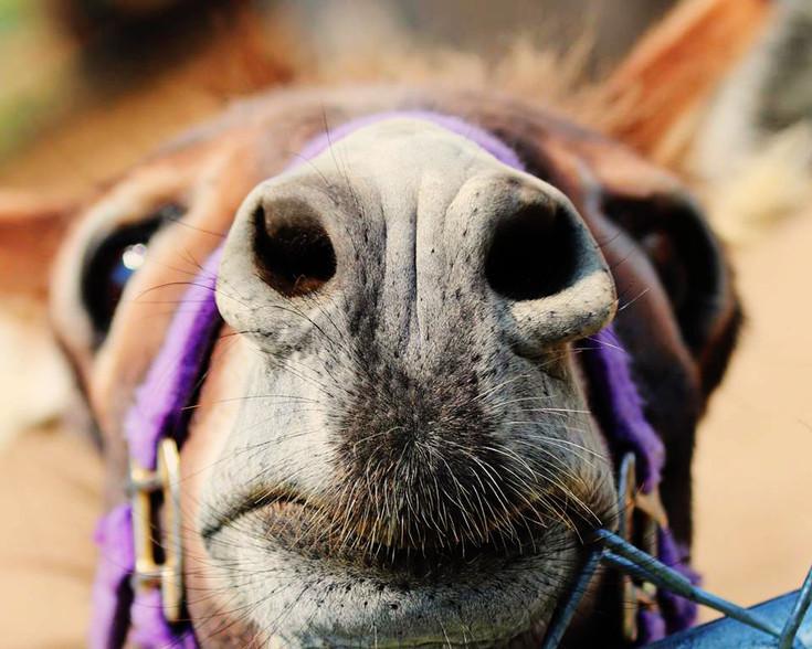 Horse-Nose_edited.jpg