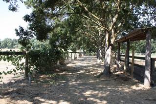 Shaded Trail Walk