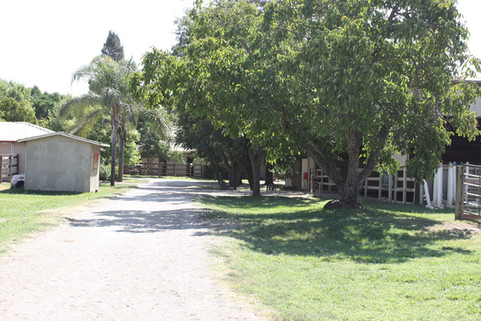 Tree lined walk way