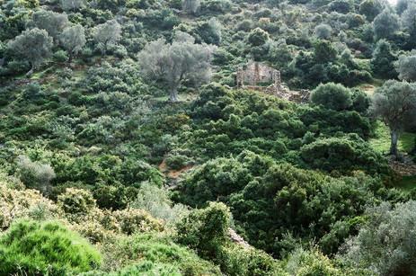 Zarakes old village