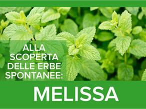 Melissa: la pianta dell'ansia