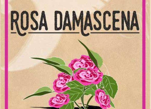 Rosa Damascena, pelle luminosa