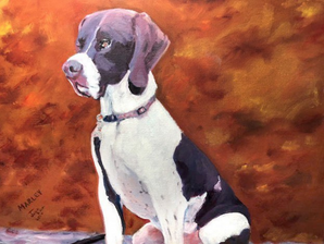 An English Pointer