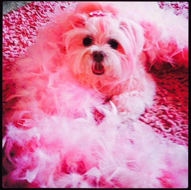 Miss Kisses is Kitten Kay Sera's pink pup_