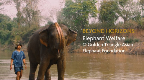 Elephant Welfare @ Golden Triangle Asian Elephant Foundation
