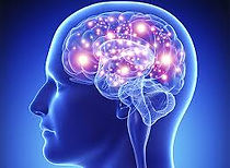 мозг.jpg