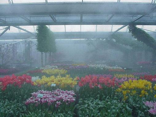 13-туман.jpg