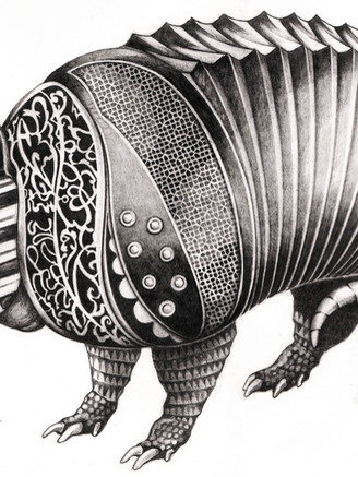 armadillo gris p.jpg