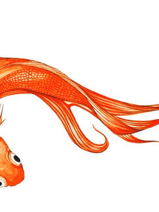 pez xino fondo blanco.jpg
