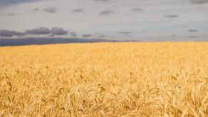 Weizenmehl - Was bedeuten die Zahlen auf der Mehlpackung?