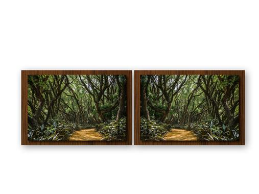 Floresta Encantada II