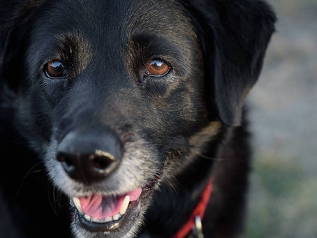 4 Ways to Help Your Aging Dog