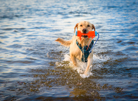4 Spring Safety Tips for Dog Owners