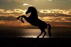 animal-animals-backlit-236636