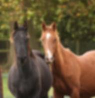 Better Horses In Field.jpg