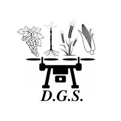 30.LOGO D.G.S.