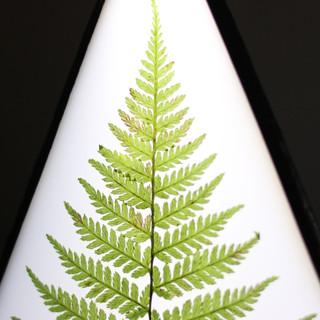 Гербарий папоротника в светильнике