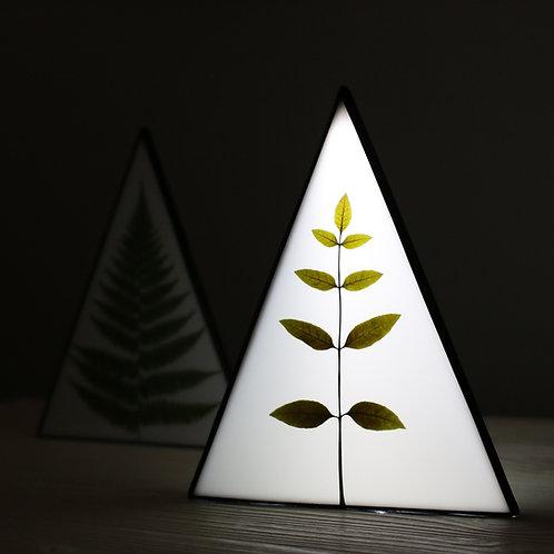 Светильник с гербарием ясеня