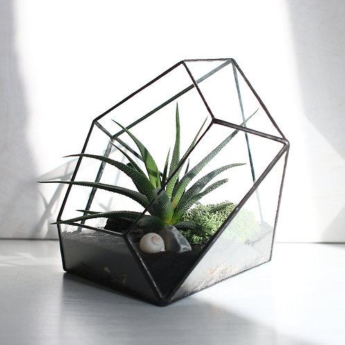Флорариум в форме бриллианта