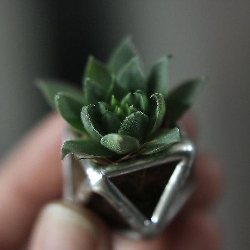 Брошь из стекла с живым растением суккулентом