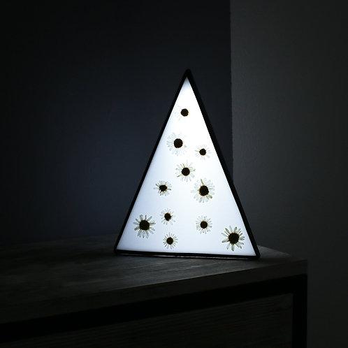Светильник с гербариями ромашки