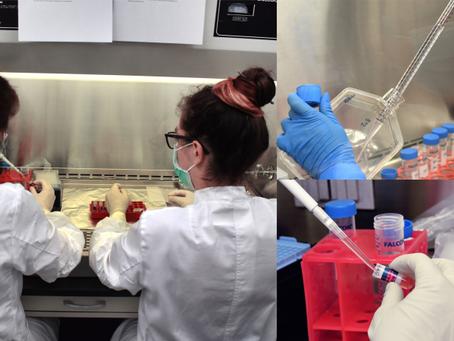 Zürih Üniversitesi Ve Airbus, Uluslararası Uzay İstasyonu'nda Minyatür İnsan Dokusu Üretiyor